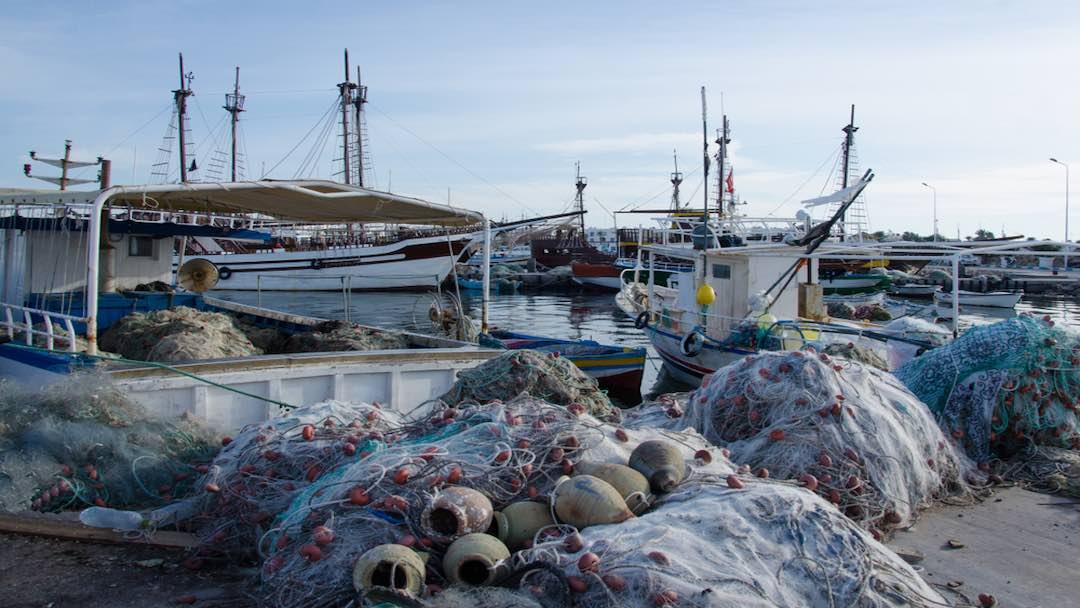 Tunisia, la mattanza degli squali